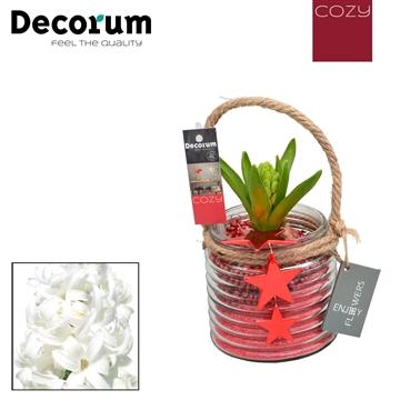 Hyacint Ribbing Glass HL10826WP [COZY]