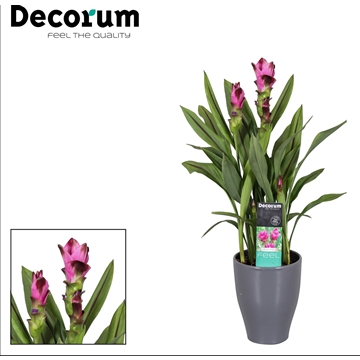 Curcuma pot Antraciet