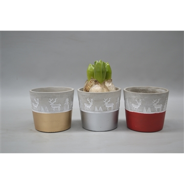 Hyacinthus in cement pot rendier