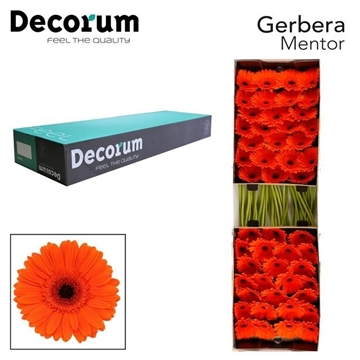 GE GR Mentor Decorum