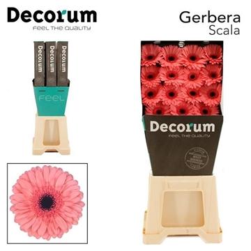 GE GR Scala DiaDecorum