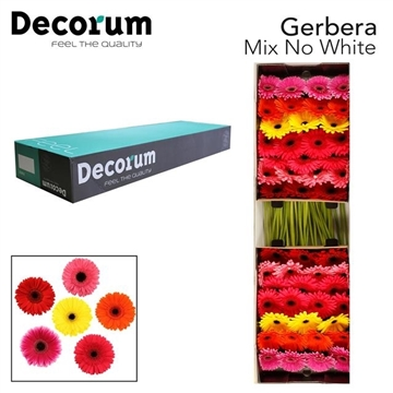 GE GR Mix No White Decorum