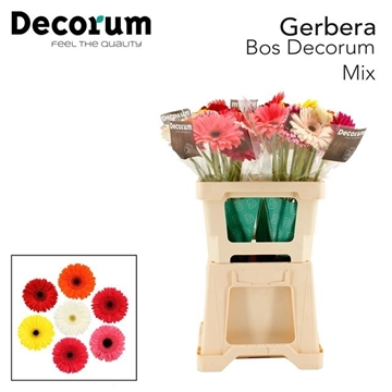 GE GR MIX Bos 4x10