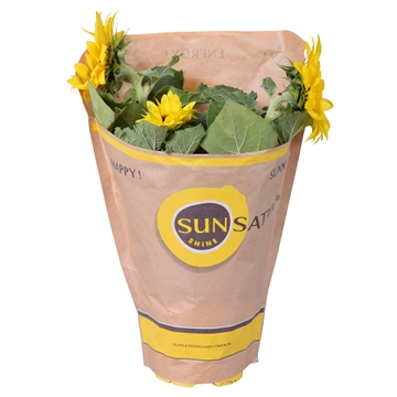 Helianthus Multiflower in Sunsation hoes