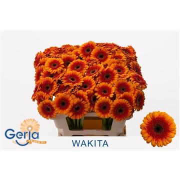 GE MI WAKITA water fc 996
