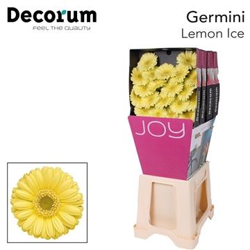 Ge Mi diamond Lemon Ice