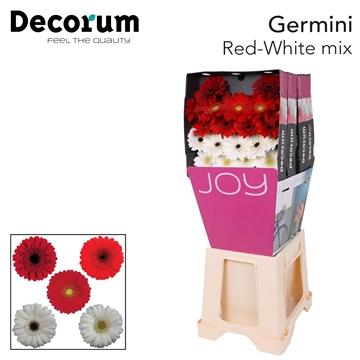 Ge Mi diamond mix Red-White