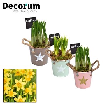 Narcis Star Bucket Mini HL10773N