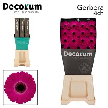 GE GR Rich DiaDecorum