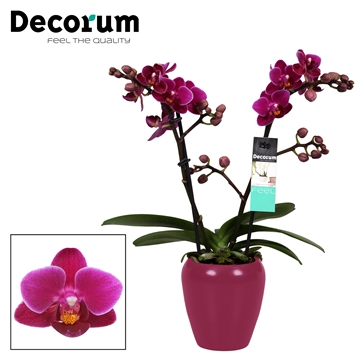 Decorum Purple princes 2 tak vertakt Paars Keramiek