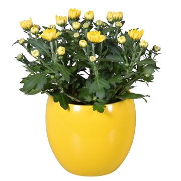 """Chrysanthemum in Geel """"Lisa"""" keramiek"""