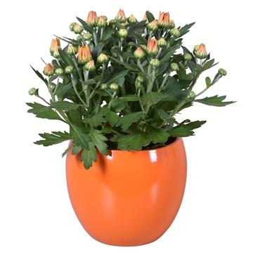 "Chrysanthemum in Oranje ""Lisa"" keramiek"