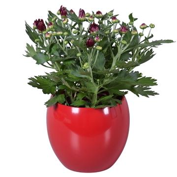 """Chrysanthemum in Rood """"Lisa"""" keramiek"""