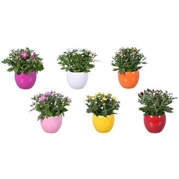 "Chrysanthemum in Gemengd ""Lisa"" keramiek"