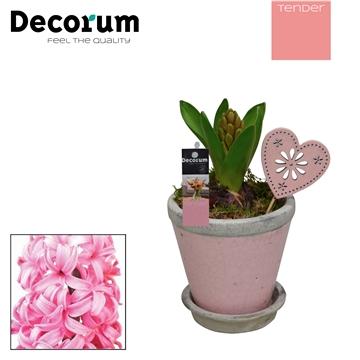 Hyacint Crackle Pot Mini HL18334PP [TENDER]