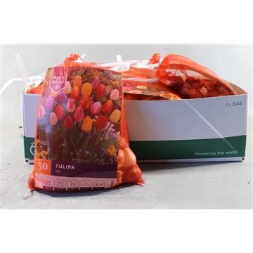Tulipa Mix 50 stuks baal