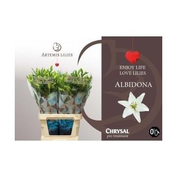 Albidona 5+