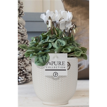 Cyclamen SS Picasso Wit in Liv Ceramics