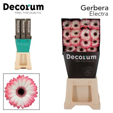 GE GR Electra Decorum