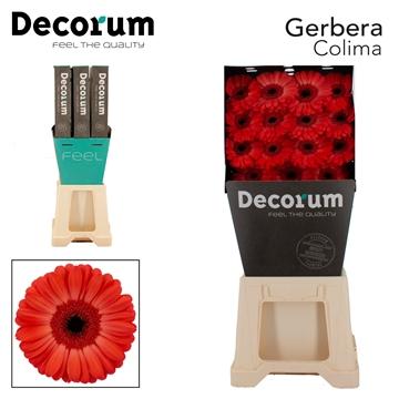 GE GR Colima DiaDecorum