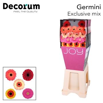 Ge Mi diamond Decorum Exclusive mix X20