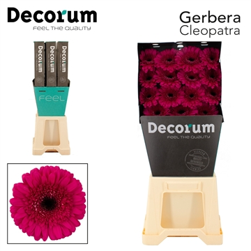 GE GR Cleopatra Decorum