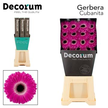 GE GR Cubanita Decorum