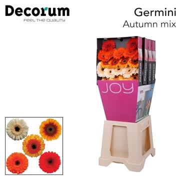 Ge Mi diamond Autumn mix X20