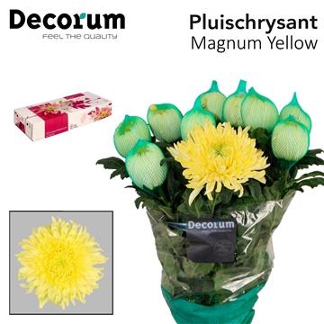 Chr G Magnum Yellow