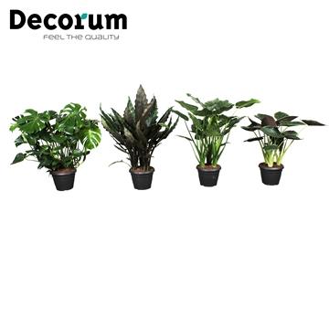 Planten gemengd 35c