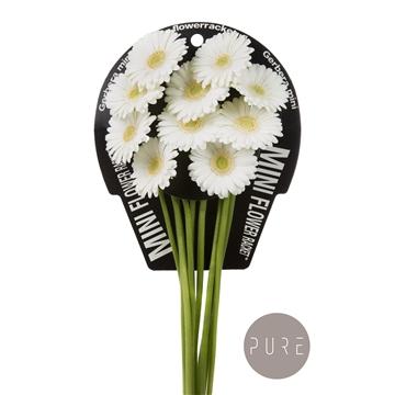 Ge Mi Albino flowerracket
