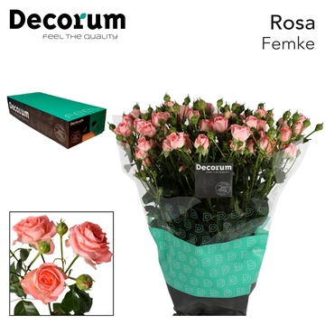R TR Femke box