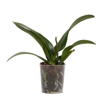 Cut back plants - 9cm