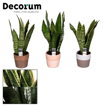 Collectie Reflections of Pure - Sansevieria in pot Marrit (Decorum)