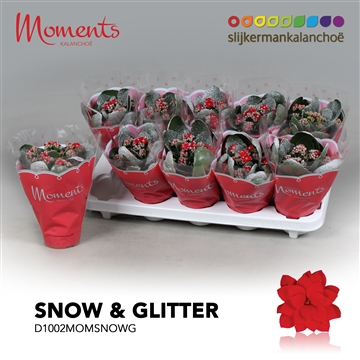 Kalanchoë Moments - Red with snow and glitter