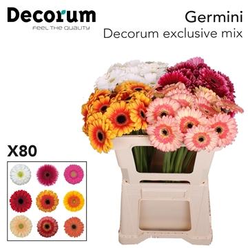 Ge Mi Decorum Mix Exclusive