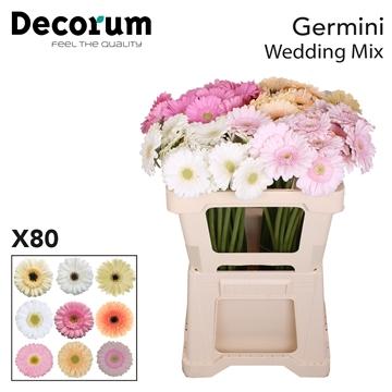 Ge Mi Mix  Wedding