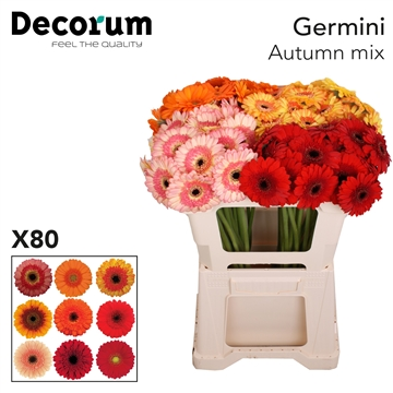 Ge Mi Mix Autumn