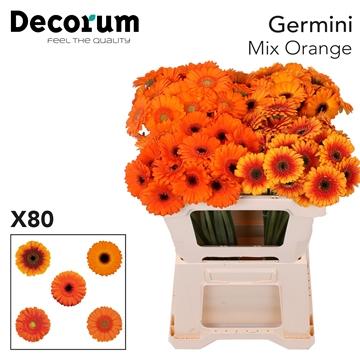 Ge Mi Mix Orange