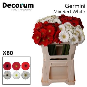 Ge Mi Mix Red-White