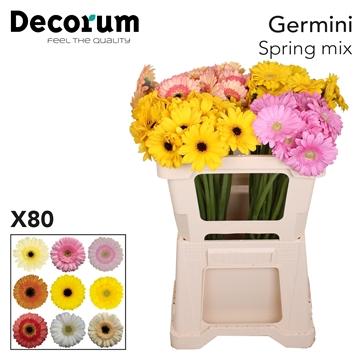 Ge Mi Mix Spring