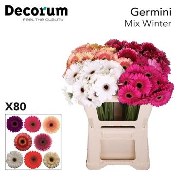 Ge Mi Mix Winter
