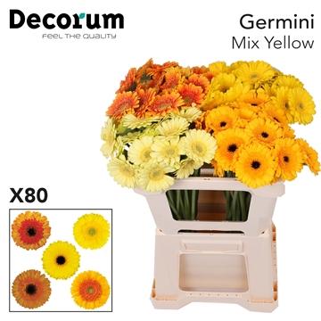 Ge Mi Mix Yellow