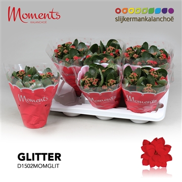 Kalanchoë Moments - Red with glitter