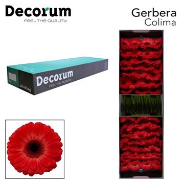 GE GR Colima Decorum