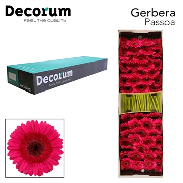 GE GR Passoa Decorum