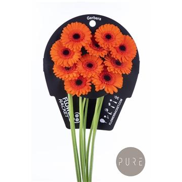 Ge Mi Caramba flowerracket
