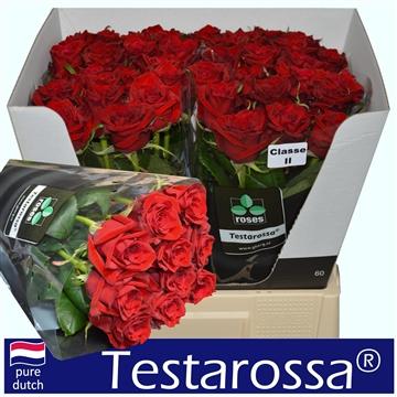 R Gr Testarossa A2 60