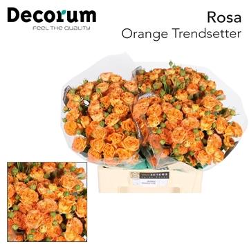 R TR Orange Trendsetter