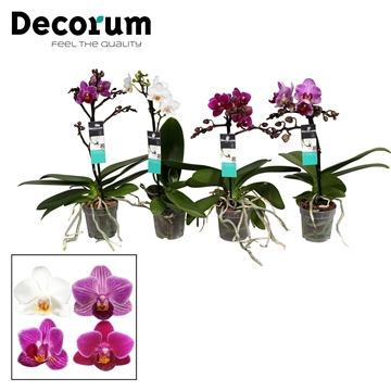 Decorum 1-tak mix potmaat 7cm